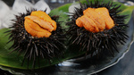 Stock-photo-sea-urchin-222487771